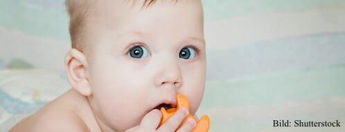 Babys stecken Spielzeug in den Mund