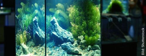 Auch beiNacht macht ein Aquarium eine gute Figur