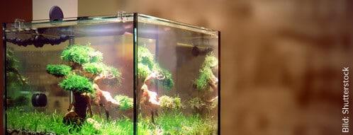 Ein schönes Aquarium passt perfekt in die Wohnungseinrichtung