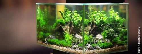 Online gibt es die größte Auswahl für einen Aquarium-Kauf