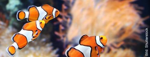 Fischfutter online bestellen und die Tiere glücklich machen