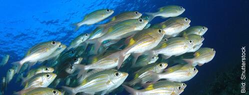 Fische im Aquarium halten und so den Raum verschönern