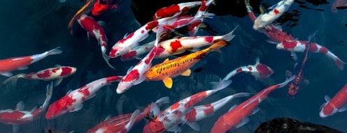 Fische müssen täglich gepflegt und gefüttert werden