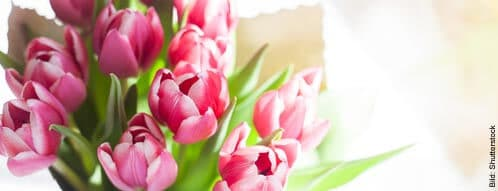 Blumen versenden lassen