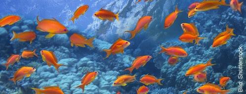 aquarium zierfische online kaufen die besten shops auf einen blick. Black Bedroom Furniture Sets. Home Design Ideas
