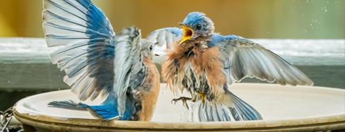 vogelbad gutscheine - vogelbad online bestellen