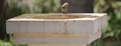vogelbad gutscheine - vogelbad online finden