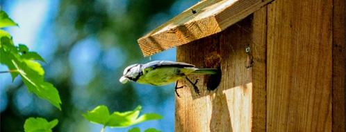 vogelhaus gutscheine - vogelhaus kaufen geht auch online