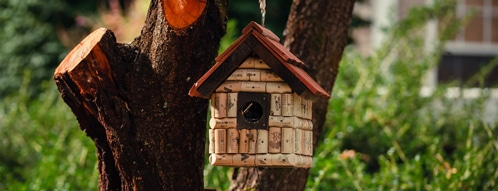 vogelhaus gutscheine - vogelhaus online kaufen geht auch