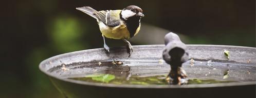vogeltraenke gutscheine - vogeltraenke online bestellen geht auch