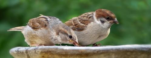 vogeltraenke gutscheine - vogeltraenke online bestellen