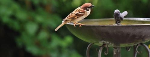 vogeltraenke gutscheine - vogeltraenke online kaufen geht auch