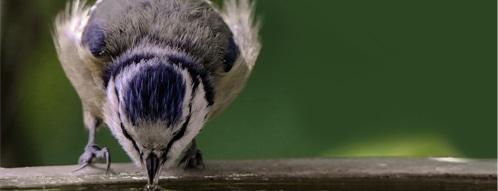 vogeltraenke gutscheine - vogeltraenke online